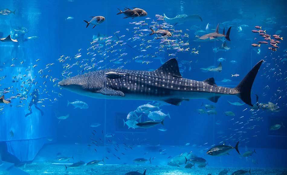 Oman Aquarium Faces Oman